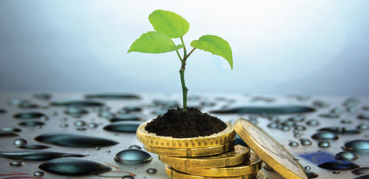 photo of plant growing atop stack of coins
